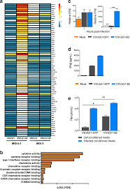 Enhanced susceptibility of cancer cells to oncolytic rhabdo ...