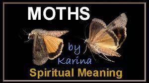 Image result for moth