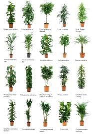 best low light office plants. Good Office Plants Awesome Low Light Part 3 . Best