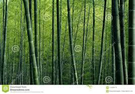 Groen Bamboe Bos Geweven Behang Stock Afbeelding Afbeelding