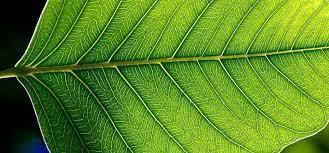 Plastyka kl5 Temat: Układy form w naturze. Cele: Uczeń: - podaje przykłady  różnych układów form w naturze Natura jest wi