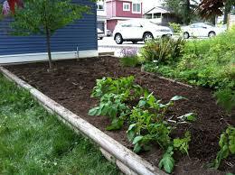 weeded backyard garden