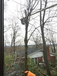 shifflett tree service57