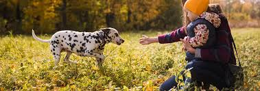 Dalmatian Dog Breed Facts And Personality Traits Hills Pet