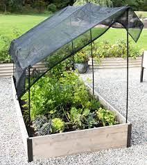 35 great shade gardening ideas shade