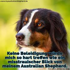 Australian Shepherd Zitate Und Sprüche