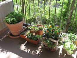 balcony vegetable gardens