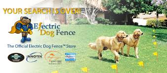 invisible fence for small dogs. Our Invisible Fence Company Sector Has Numerous Products We Sell Only The Best And For Small Dogs