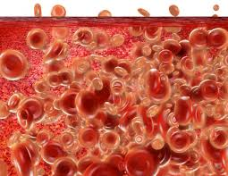 Image result for bone marrow