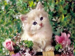 cute cat wallpaper backgrounds. Exellent Wallpaper Wallpapers For U003e Cute Cat Kitten With Wallpaper Backgrounds