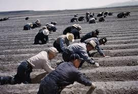 「ルーズベルト大統領の日系アメリカ人強制収容補償声明」の画像検索結果