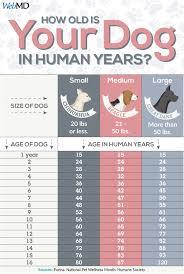 Dog Years Chart To Human Years