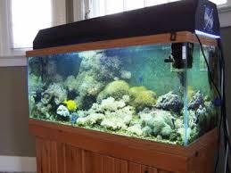 A Marine Aquarium Maintenance Checklist The Salt Creep