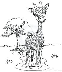Giraffe Coloring Giraffe Coloring Page Giraffe Colouring Pages