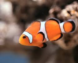 the meaning of a fish in a dream book will help you to find the way