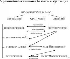 Биологическая адаптация это что такое Биологическая адаптация  Уровни биологического баланса и адаптации
