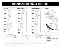 Owl Pellet Bone Chart Owl Pellet Bone Chart Free Www Bedowntowndaytona Com