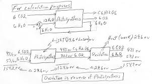 oxidation is reverse of photosynthesis sketch