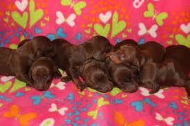Who doesn't love chocolate!! - photo via Alice Heinen Ketchum ...