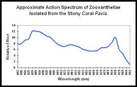 Action Spectrum Feature Article Lighting The Reef Aquarium Spectrum Or