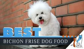 15 Best Dog Foods For Bichon Frises 2019 Feeding Guide