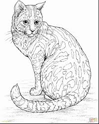 29 How To Draw Anime Cats Limited Cute Cat Coloring Pages Best Anime