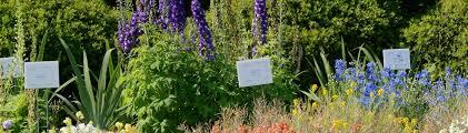 florida gardening calendar uf ifas
