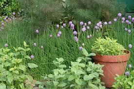 how to grow a herb garden. Herb Garden How To Grow A