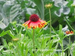 florida vegetable gardening. Practicing Organics In A Florida Vegetable Garden Gardening