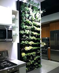 growing herbs indoors with artificial light need this floor to ceiling herb garden growing herbs indoors growing herbs indoors with artificial light