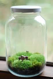 Pin by J H on fairy gardens | Pinterest | Terraria, Moss terrarium ...
