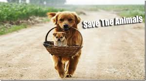 Animal Quotes Save Animals Quotes Animal Rights Quotes Powerofquotes