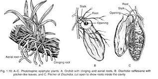 Autotrophic And Heterotrophic Plants With Diagram