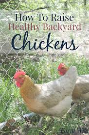 Adopting And Caring For Backyard Chickens  The Humane Society Of How To Keep Backyard Chickens