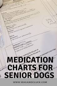 Senior Dogs Why Medication Charts Are Helpful Wag And