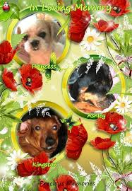 In Loving Memory Of Ashley, Kingston & Princess   S. P.'s Space of 6 T's -  Tastes, Theatre, Thoughts, Time, Travels, and Treatments ......