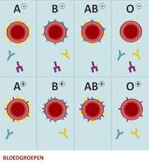 Wat is een bloedgroep