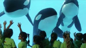 Here\u0027s The Story of SeaWorld | SeaWorld® - YouTube