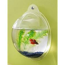 small screenshot 1 office fish. fish bubble wall mounted acrylic bowl small screenshot 1 office