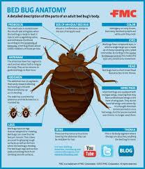 Ysk How To Identify Bed Bugs Accurately Youshouldknow
