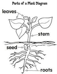 f8e11021445a4c54417401d7f653279c science projects science ideas 25 best ideas about diagram of a flower on pinterest plant on structure of flower worksheet