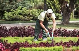 benefits of hiring a gardener