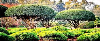 Sichtschutz Aus Pflanzen F R Garten Terrasse Luxurytrees Sichtschutz Garten Pflanzen