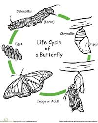 The Life Cycle Of A Butterfly Lesson Plan Education Com