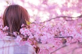 「桜フリー画像」の画像検索結果