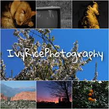 Ivy Rice Photography - Home | Facebook