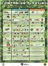 Plant Compatibility Vegetable Gardens Chart Garden Companion Grow Chart
