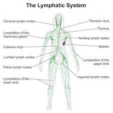 Lymph Protocol Discoverlasers Com
