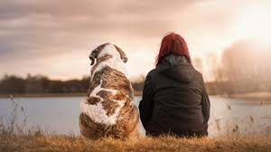 Image result for Picture of an animal doctor with a patient who is ill