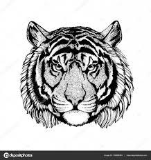 Vektor Tygr Pro Tetování Sportovní Loga Triko Plakát Stock